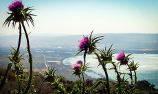 Aliyah Ulpan Kinneret gallery Wildflowers overlooking the eastern side of the Kinneret -Sea of Galilee