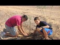 Moshav faran planting acacia trees in honor of Mount Sinai School